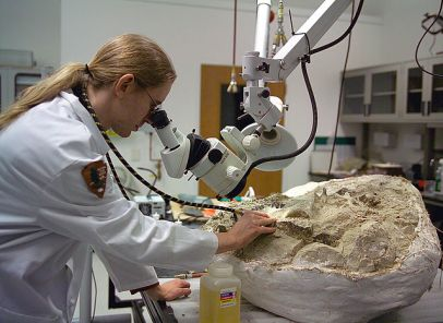 Preparing a fossil for study and display