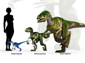 Comparison chart of raptors to human