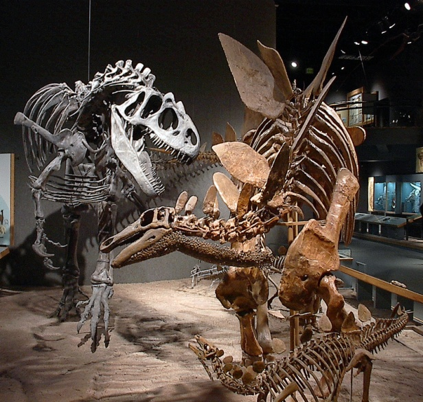 Stegosaurus protecting its' young from a T Rex attack